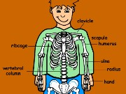 Skeleton quiz Game