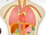 trapianto di organo 2