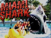 Miami Shark Game