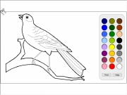 Bird colorin Game