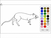 Rat coloring Game
