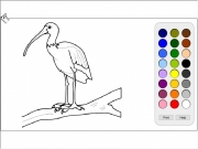 Bird coloring 2 Game
