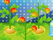 Tomato Factory Game